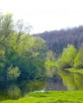 Стрелецкий лес