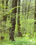 Хомутов лес