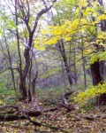 Низовья реки Ясенок
