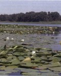 Озеро Любовицкое