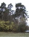 Парк в селе Аннино