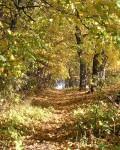 Парк в селе Шаталовка