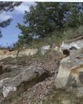 Тербунские песчаники