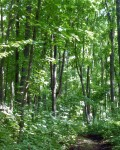 Парк в селе Коробовка