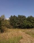 Урочище «Сосновый лес»