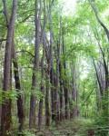 Парк в селе Денисовка