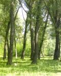 Парк в селе Долгоруково