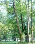 Парк в селе Репец