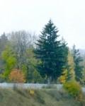 Парк в селе Стегаловка